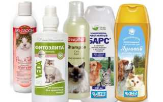 Шампунь от блох для котят — описание, состав, эффективность