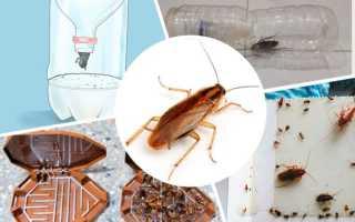 Ловушки для тараканов как первая линия обороны