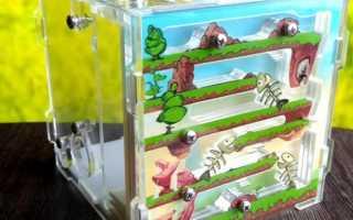 Ферма муравьев — какие виды бывают, из каких материалов лучше всего купить формикарий