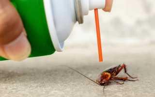 Барс от тараканов — применение популярного спрея в домашних условиях