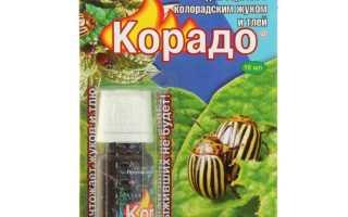 Корадо от колорадского жука — воздействие активных веществ, меры безопасности, приготовление раствора