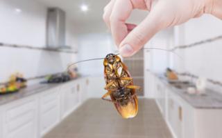 Борьба с тараканами может быть успешна, когда на помощь приходят профессионалы