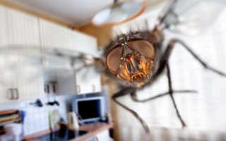 К чему снятся комары — толкование сна в зависимости от размеров насекомых, их количества, событий сновидения