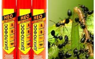 Дихлофос от муравьев в квартире: описание, обработка, эффективность