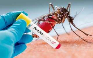 Лихорадка Денге – переносчики заболевания, борьба с комарами, симптоматика