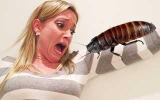Боязнь тараканов снижает качество жизни больше, чем сами тараканы