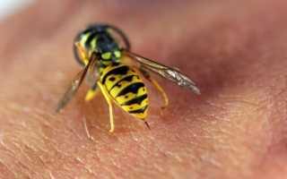 Что делать если укусила оса или пчела — описание симптомов, необходимые действия, опасность от укусов