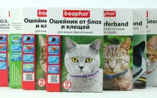 Ошейник от блох для кошек Беафар — применение, действие, эффективность!