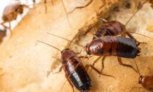 Чего боятся тараканы — то и нужно применять в первую очередь