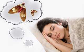 К чему снится моль — толкование ночных видений, как правильно читать сны