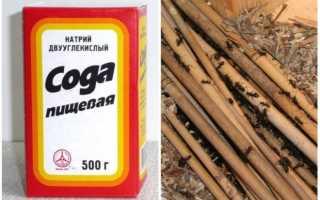 Сода от муравьев в квартире — варианты применения