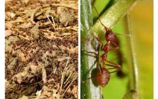 Какая польза от муравьев в природе — важность этих насекомых в жизни человека