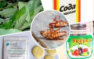 Лучшее народное средство от тараканов вы можете изготовить самостоятельно