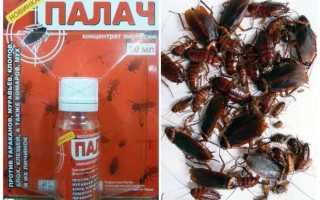Палач от тараканов — инструкция, эффективность, меры безопасности