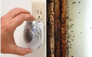 Ультразвук от муравьев в квартире: описание устройств, механизм действия, эффективность