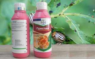 Как использовать препарат Престиж от колорадского жука для эффективной борьбы