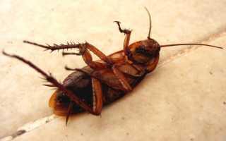 Нашатырный спирт — эффективная борьба с тараканами!