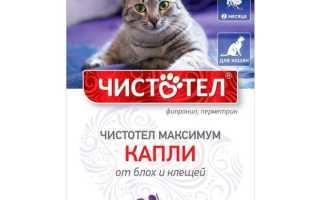 Чистотел капли от блох для кошек надежно защитят вашего питомца