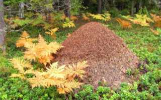 Кто ест муравьев в лесу, поле, лугу, огороде?