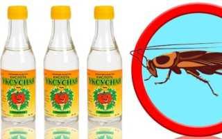 Уксус от тараканов: эффективность, действие, профилактика