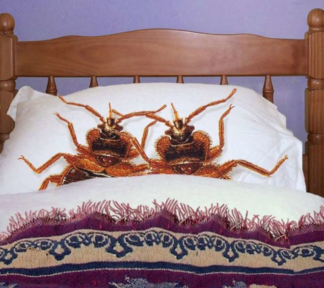 Клопы в вашей постели