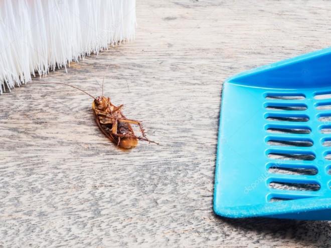 Таракан мертвый