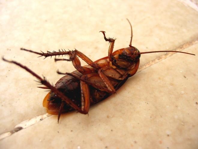 Таракан умерает