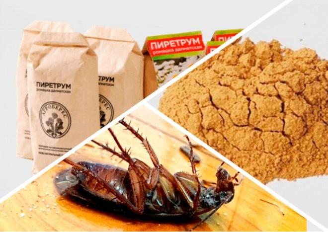 Порошок пиретрум от тараканов