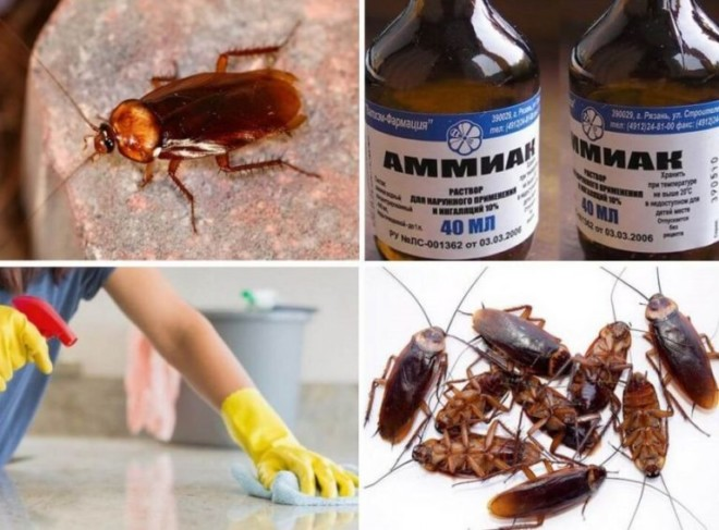 Аммиак от тараканов