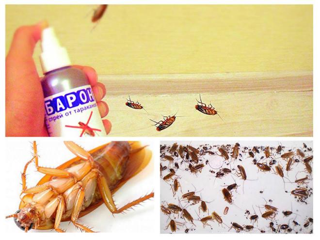 Барон убил тараканов