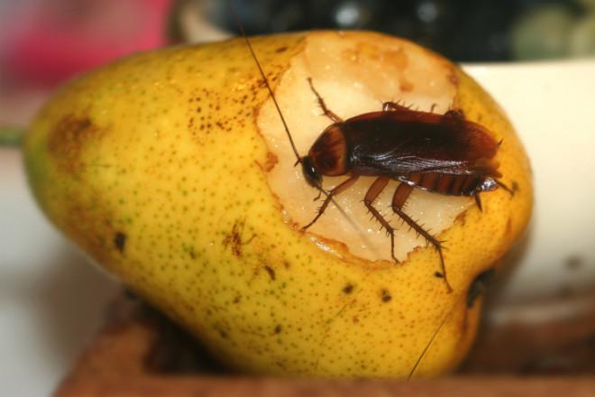 Болезни от тараканов