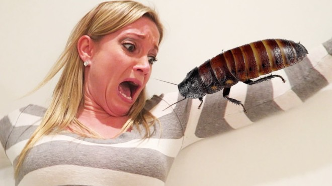 Боязнь тараканов