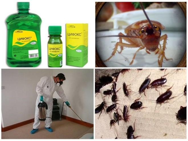 Дизинсекция от тараканов Цифоксом