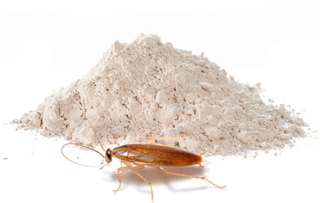 Дуст и таракан