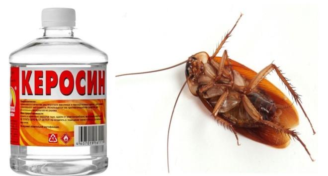Керосин от тараканов