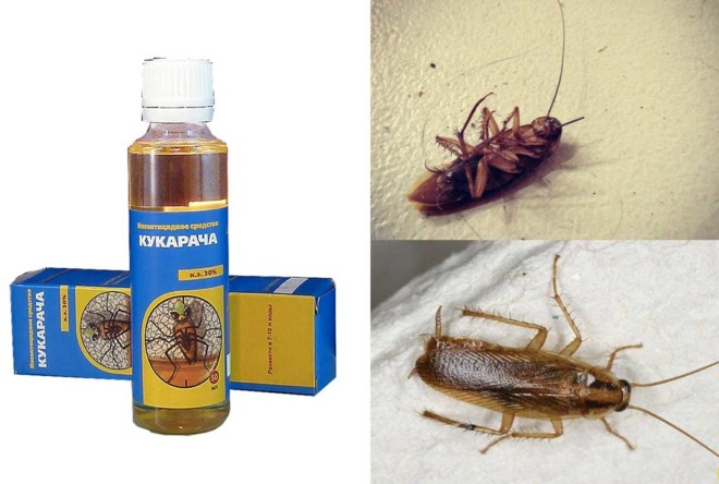 Кукарача от тараканов - подборка