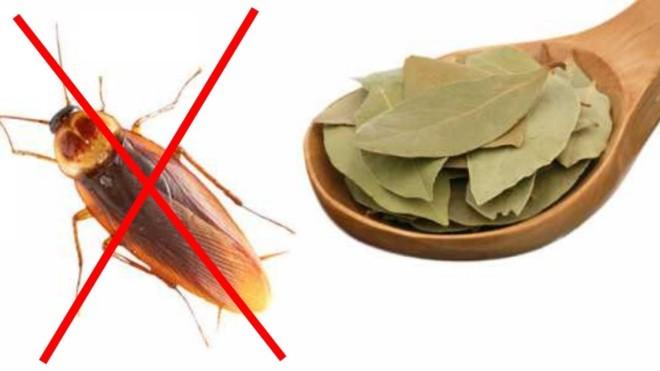 Лавровый лист от тараканов в ложке
