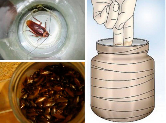 Ловушка из банки для тараканов