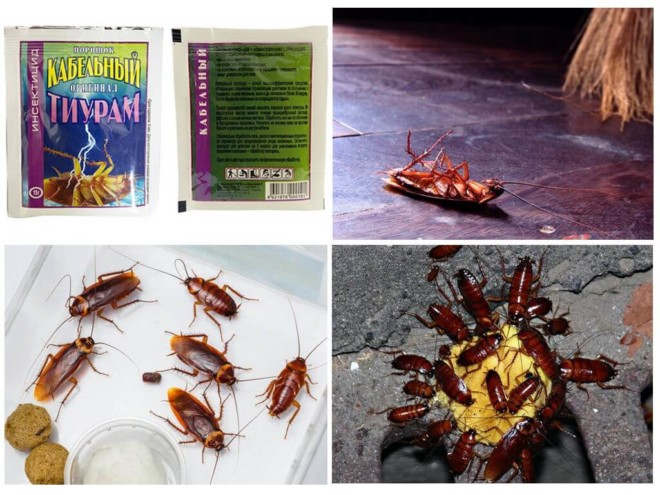 Подборка фото с тараканами