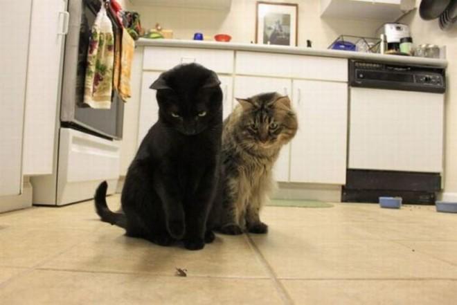 Таракан и кошки