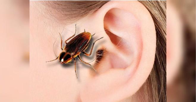Таракан заполз в ухо