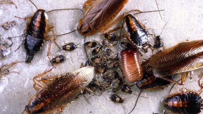 Тараканы что делать