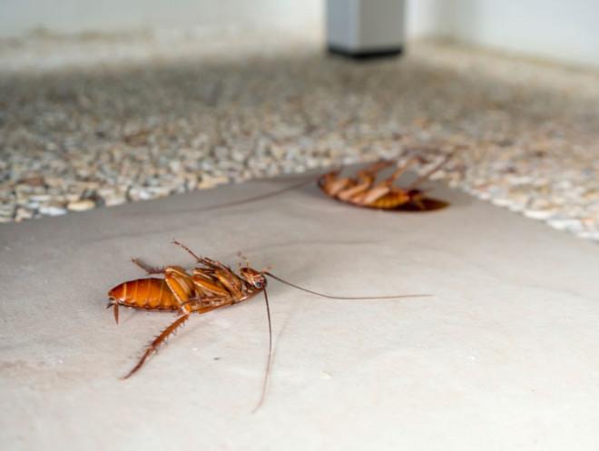 Тараканы мертвые