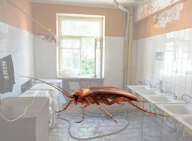 Тараканы в общаге