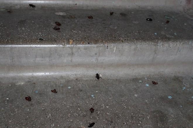 Тараканы в подъезде