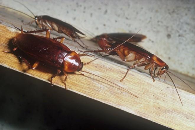 Тараканы в шкафу