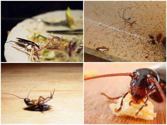 Тараканы вредны