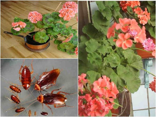 Комнатные растения от тараканов