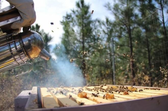 Дым для пчел