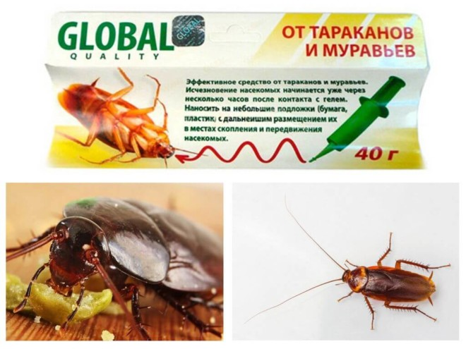 Глобал против тараканов